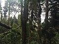 Parque Ecológico de El Boliche - Quito, Equador - panoramio (6).jpg