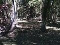 Parque Florestal (1).JPG