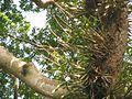 Parque La Llovizma 2003 036.jpg