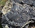 Partially devitrified rhyolitic obsidian (Roaring Mountain Member, Plateau Rhyolite, Upper Pleistocene, ~59 ka; Obsidian Cliff, Yellowstone, Wyoming, USA) 7 (32929469038).jpg