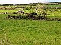 Pasture near Dunbeg - geograph.org.uk - 16640.jpg
