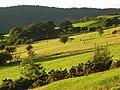 Pastures, Bassenthwaite - geograph.org.uk - 901929.jpg