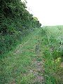 Path following a hedge - geograph.org.uk - 1344256.jpg