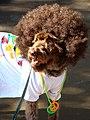 Peacenick pup (1700896623).jpg
