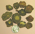 Peyote buttons seized by Arcata CA Police.jpg