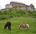 Pferde Giechburg.jpg