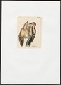 Picus syriacus - 1820-1860 - Print - Iconographia Zoologica - Special Collections University of Amsterdam - UBA01 IZ18700057.tif