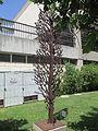 PikiWiki Israel 35413 Lone Cypress by Zadok Ben David in Tel Aviv.JPG