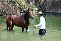 PikiWiki Israel 37843 Arabian horse.jpg