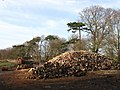 Pile of Logs near Priesthawes - geograph.org.uk - 1767180.jpg
