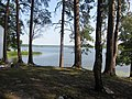 Pines on the lake shore - panoramio.jpg