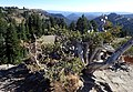 Pinus albicaulis kz01.jpg
