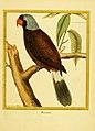 Planches enluminées d'histoire naturelle (Plate 35) (6009192426).jpg