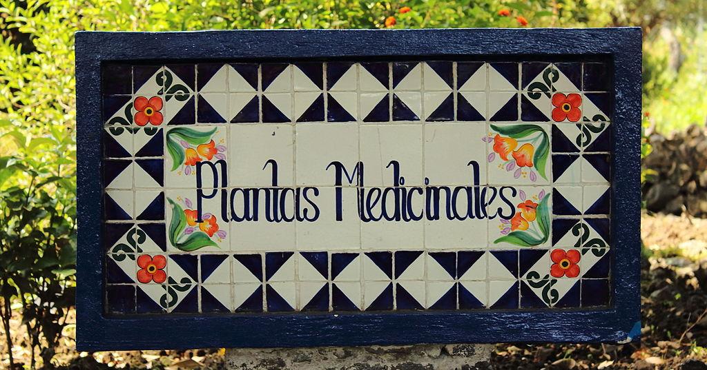 Archivo plantas medicinales jpg wikipedia la for Jardin botanico medicinal