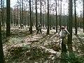 Planters working on the Plumas NF (3820985879).jpg