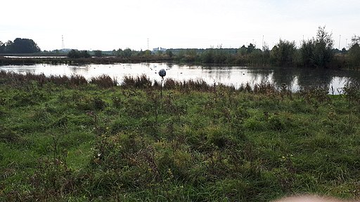 Poel in kanaalpark 's-Hertogenbosch