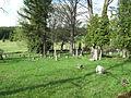 Pohoří na Šumavě, hřbitov.jpg