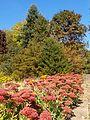 Poltava Botanical garden (53).jpg