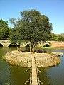 Ponte do Cabeço do Vouga - Lamas do Vouga - Portugal (2887758591).jpg