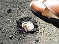 Pop-up mushroom.jpg