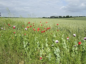 Civil parishes in Bedfordshire - Image: Poppies and wheat geograph.org.uk 472671