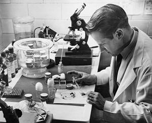 Willy Burgdorfer - Willy Burgdorfer inoculating Ornithodoros ticks, 1954.