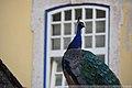 Portugal, Lisboa. (35312024524).jpg