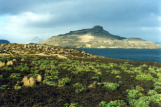 French Southern and Antarctic Lands - Kerguelen cabbages on Mayes Island, Kerguelen.