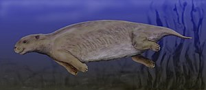 A furry, streamlined mammal swimming through the water with toes visible on each foot, similar to those of an elephant. All limbs are thrust backwards or underneath the animal.