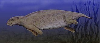 Eocene - Prorastomus, an early sirenian