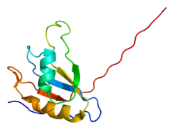 Protein EIF4B PDB 1wi8.png