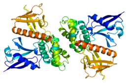 Protein NF2 PDB 1h4r.png