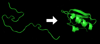 Gene expression - Protein before (left) and after (right) folding.