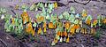 Puddling butterflies.JPG