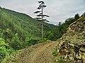 Put ka Mokroj Gori od Jovinog groba - panoramio.jpg