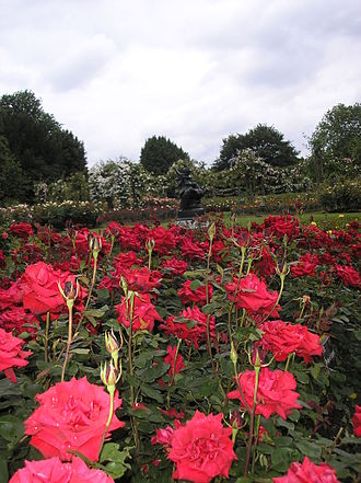 Rose garden - Queen Mary Gardens in Regent's Park, London