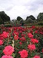 Queen Mary's Gardens P6110014.JPG