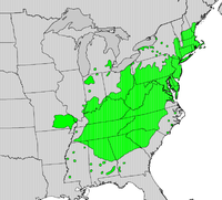 Quercus coccinea map.png