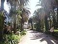 Quinta de Piñeyrúa en Aires Puros. Vista del camino de entrada.JPG