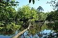 Réserve naturelle régionale des étangs de Bonnelles le 26 mai 2017 - 60.jpg