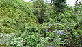 Rainforest Biome @ Eden Project (9757430524).jpg