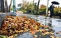 Rainy day of Tehran - 20 November 2011 41.jpg