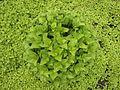 Rare plant speci.jpg
