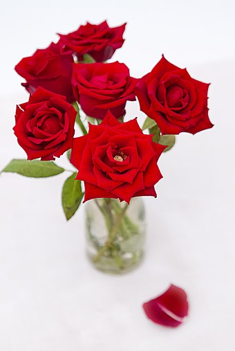 Flowers, such as red roses (pictured), are often sent on Valentine's Day Red Roses (6862116332).jpg
