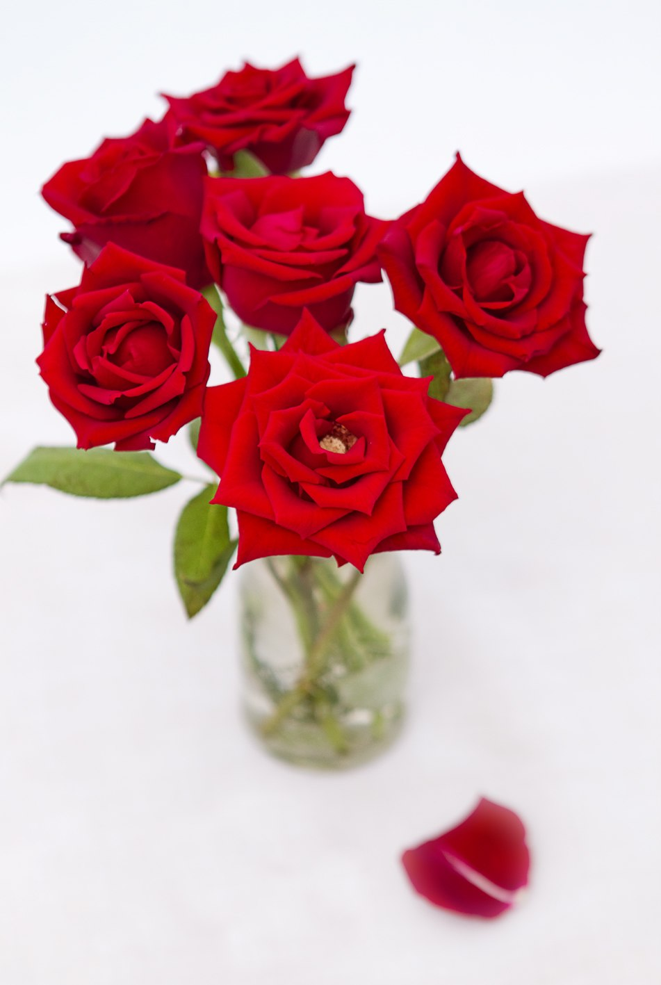 Red Roses (6862116332)