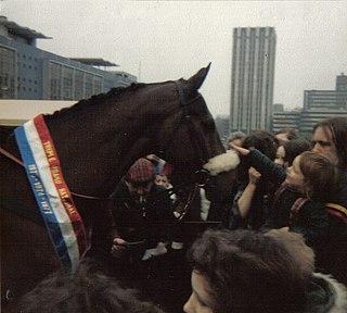 Red Rum Irish-bred Thoroughbred racehorse