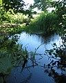 Reflections in mere, near Wallstone Farm - geograph.org.uk - 202112.jpg