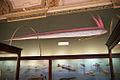 Regalecus glesne, Naturhistorisches Museum Wien (in context).jpg