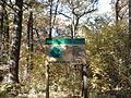 Rezerwat przyrody Dęby w Meszczach 201012 12.13.jpg