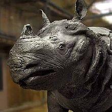Croyance autour de la corne de rhinocéros dans RHINOCEROS 220px-Rhinoc%C3%A9ros_de_Louis_XV